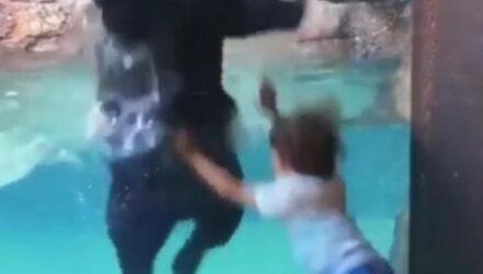 Придя в зоопарк, мальчик «потанцевал» с дружелюбным медведем