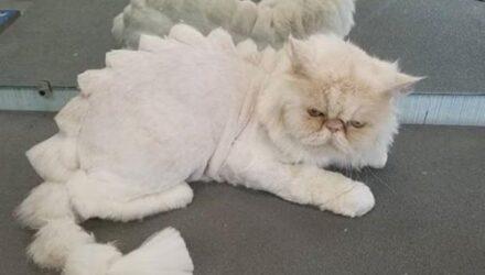 Кошки, превращённые в динозавров благодаря стрижке, вызывают к себе большую жалость