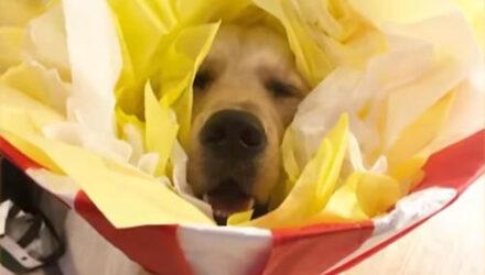 Воротник, который пёс носил после операции, стал для хозяйки источником вдохновения