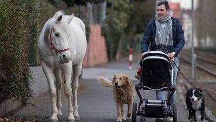 Лошадь каждый день ходит гулять в одиночестве