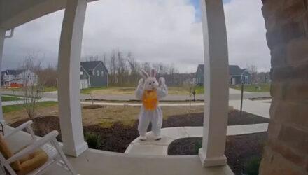 Пасхальный кролик порадовал домовладельцев неожиданным шоу