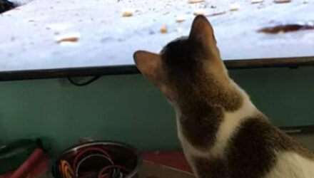 У кошки, увидевшей грызунов по телевизору, проснулись охотничьи инстинкты