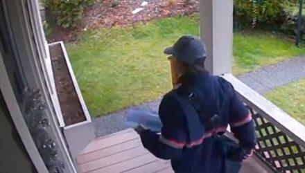 Защищая дом от почтальона, глупая четвероногая охранница разбила окно
