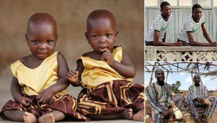 Поможет ли бамия родить близнецов? (4фото)