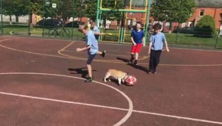 Талантливая собака обожает играть в футбол