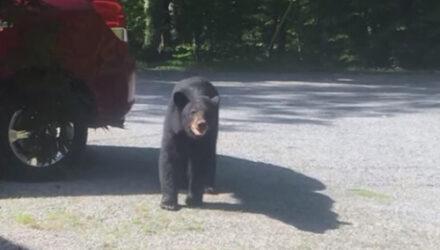 Медведи, забравшиеся в машину, преподали туристу важный урок