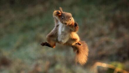 Ради эффектной фотосессии белка научилась «летать»