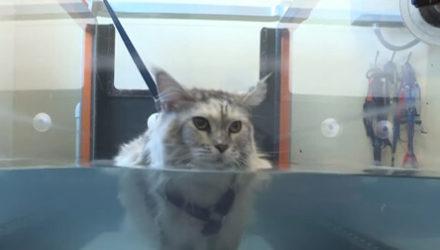 Ветеринары начинают применять необычные способы лечения своих пациентов