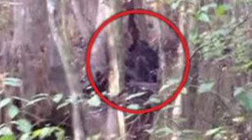 Огромное чёрное существо в лесу привело очевидца в ужас