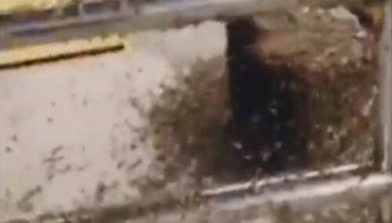 Пчёлы, сбежавшие из грузовика, устроили хаос и покусали несколько человек