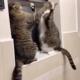Кошки выбрали не слишком удобное место для выяснения отношений