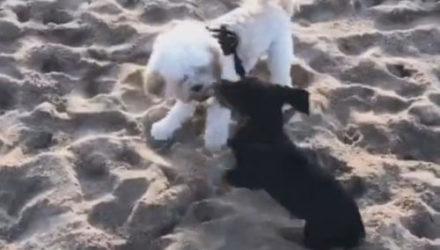 Разыгравшиеся собаки уронили случайную прохожую лицом в песок