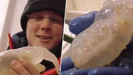 Подо льдом Антарктиды найдено неизвестное существо. В Интернете вспоминают «Нечто» и просят не рисковать!