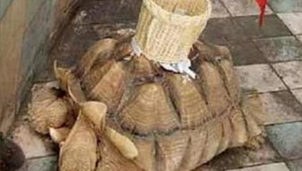 Людям предложили кидать деньги в корзину, приклеенную к панцирю черепахи