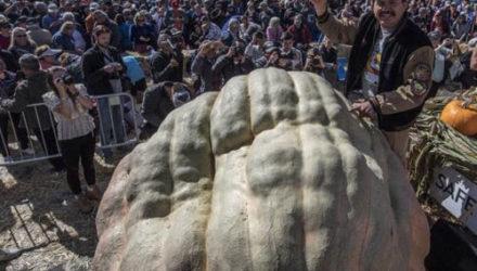 Огромная тыква не дотянула до мирового рекорда, но стала рекордом штата