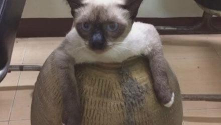 Упитанная кошка лишила хозяйку керамического горшка