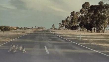 Машина с автопилотом не стала давить уток на дороге