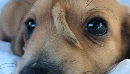Удивительного щенка-единорога многие хотят сделать своим питомцем
