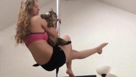 Кот решил попробовать свои силы в танцах на шесте
