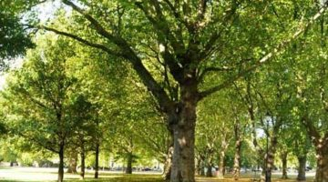Тучные посетители парка ломают деревья во время тренировок