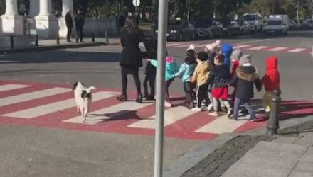Собака нашла полезное занятие и помогает детсадовцам