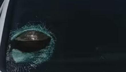Черепаха совершила шокирующий полёт и застряла в стекле автомобиля