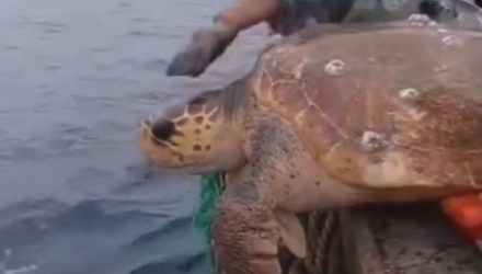 Рыбаки не только удивились своему необычному улову, но и выпустили его обратно в море