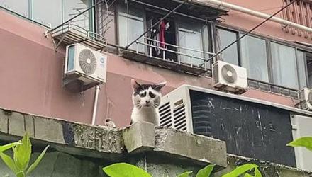 Из-за необычного окраса кошка выглядит воплощением мировой скорби