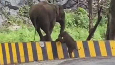 Мама-слониха протянула своему детёнышу хобот помощи