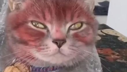 Кот стал клиентом детского салона красоты и заполучил странный макияж