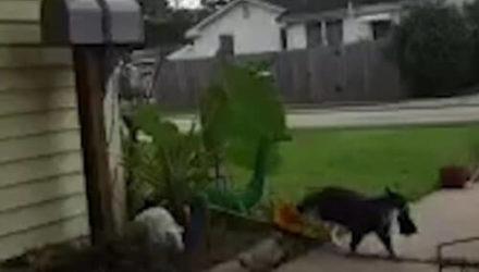 Грабителем, похищавшим одежду, оказался кот