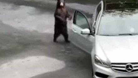Медведь, открывший машину, испугался содеянного