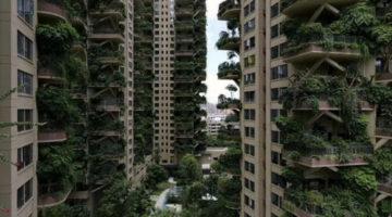 Жилой комплекс, превращённый в экзотический лес, стал кошмаром для жильцов