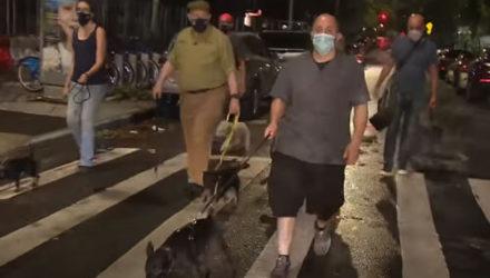 Владельцы собак объединились в ночной патруль по борьбе с крысами