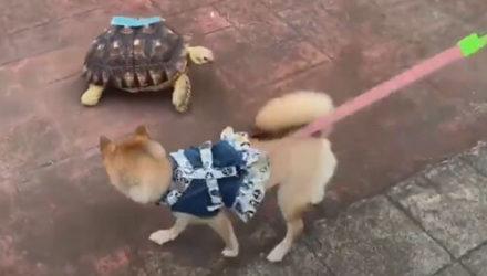 Собака не пожелала знакомиться с жуткой черепахой