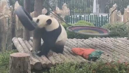 Панда всех повеселила своей необычной смешной шляпой