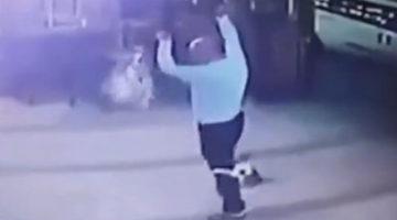 Собачник не ожидал, что повстречается с воинственной кошкой