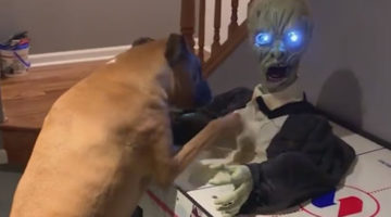 Боксёр доказал, что зомби-апокалипсис ему не страшен