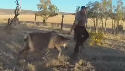 Спасателям пришлось не только освобождать оленя, но и отбиваться от него