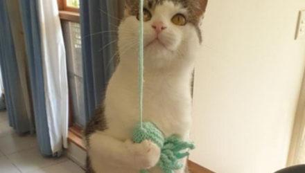 Кота, который слишком часто возвращается в приют, прозвали бумерангом