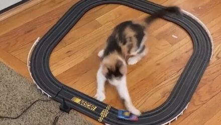Авария на игрушечных автогонках случилась из-за стремительной кошки