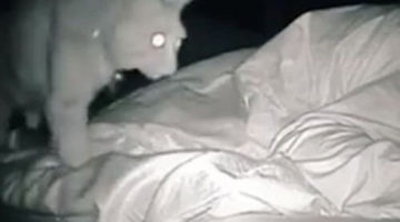 Хозяйка кота выяснила, почему она никогда не высыпается