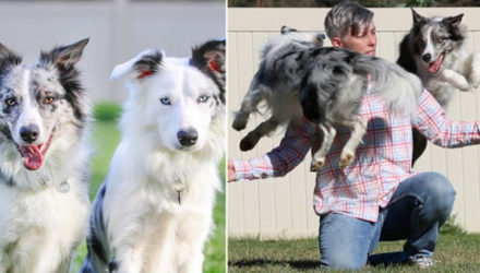 Умные собаки, выучившие много трюков, попали в Книгу рекордов Гиннеса