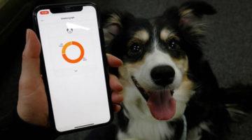 Умный ошейник позволяет хозяевам собак понять эмоции питомцев