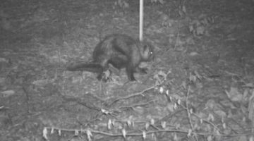 Камера слежения сфотографировала существо, которое не так просто идентифицировать