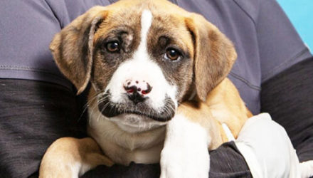Брошенный «усатый» щенок нашёл любящих хозяев