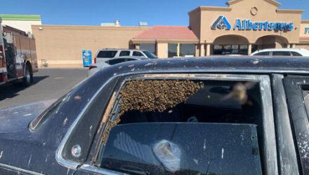 Пожарный успешно справился с роем пчёл и спас автомобилиста