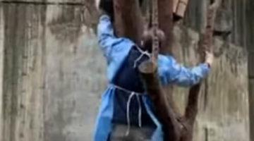 Чтобы добраться до панды, смотрителю пришлось стать покорителем деревьев