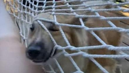 Собаку, решившую полежать с хозяйкой, не остановит даже сетка гамака